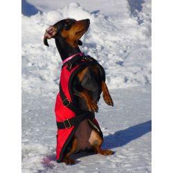 Red Dachshund Dog Coat