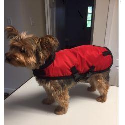 Dachshund Raincoat