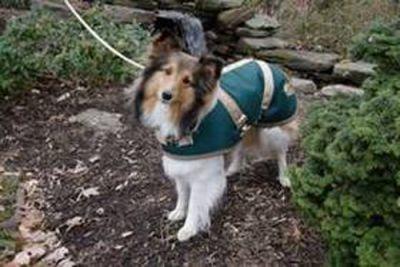 Green/Tan Dog Coat