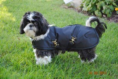 Dachshund Dog Coat Black