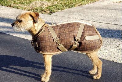 Coffee Plaid Dog Coat
