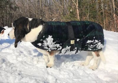 Basset dog coat-Snuggler