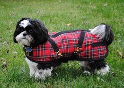 Dachshund Dog Coat Red Plaid
