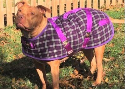Plum Plaid Dog Coat