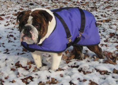 Bulldog Dog Coat