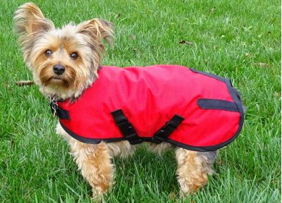Red Rain Dog Coat