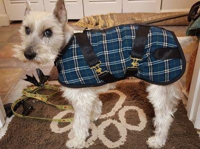 Marine Plaid Dog Coat