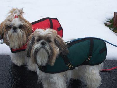 Green Dachshund Dog Coat