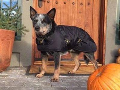 Black Nylon Dog Coat