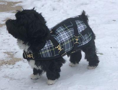 Blackwatch Dachshund Dog Coat