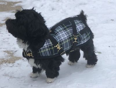 Blackwatch Dog Coat