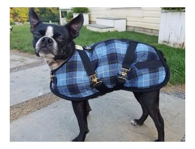 Willow Plaid Dog Coat