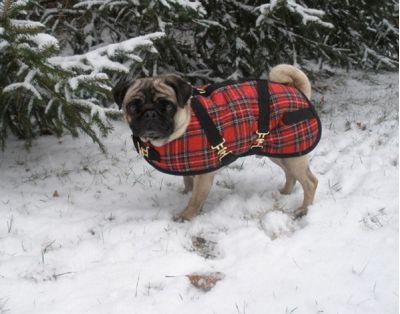 Red Plaid Dog Coat