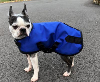 Royal Dog Rain Coat