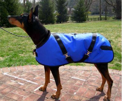 Royal Nylon Dog Coat