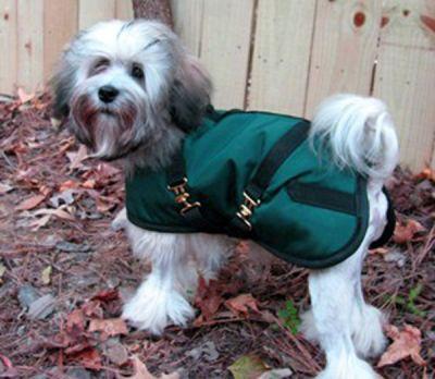 Green/Black Dog Coat