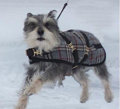 Gray Plaid Dog Coat