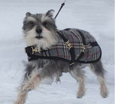 Grey Plaid Dog Coat