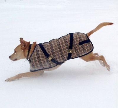 Blue Plaid Dog Coat