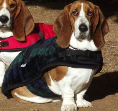 Basset Dog Coat Blackwatch Plaid