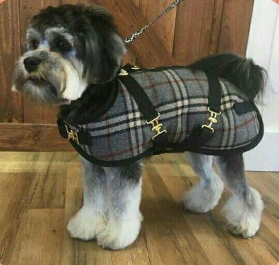Dachshund Dog Coat Gray Plaid