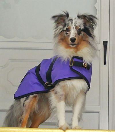 Purple Nylon Dog Coat